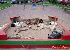 dog days of summer :)