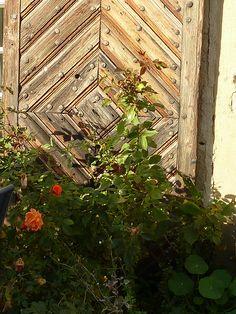 Rosen vor alter Tür