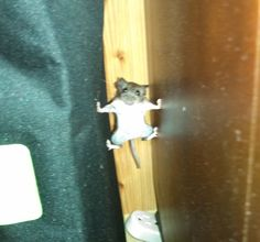 Spotted a mouse and it went full Mission Impossible on me @EmilyRedmill