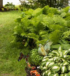 Ferns and Hosta garden