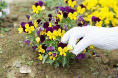 毎月江南高等特別支援学校の皆さんが、庭をお手入れして下さいます。