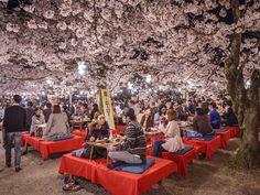 The springtime Hanami festivals in Maruyama Park are especially breathtaking.