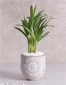 Love Palm in Grey Patterned Vase! Flower Delivery Service, Center Pieces, Garden Pots, Indoor Plants, Succulents, Planter Pots, Palm, Gardening, Bedroom