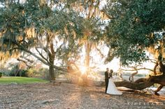 Sun flare at Boone Hall Plantation, Charleston SC