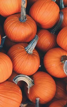 Pumpkin, Thanksgiving, Vegetable, Natural Foods Wallpaper for Android [Full HD], Food and Drink Background and Image Free Fall Wallpaper, October Wallpaper, Pumpkin Wallpaper, Iphone Wallpaper Fall, Halloween Wallpaper Iphone, Food Wallpaper, Halloween Backgrounds, Wallpaper Backgrounds, Image Halloween