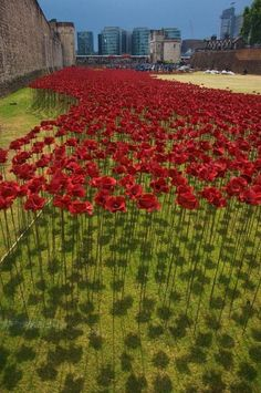 Poppies Pour Like Blood from the Tower of London - This summer, the Tower Of London will be surrounded by a sea of crimson. This installation will commemorate each and every British and Colonial fatality from World War 1 by planting 888,246 red ceramic poppies in a flowing sea around the tower's dry moat.
