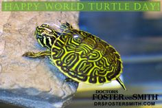 In honor of tomorrow (May 23rd) being World Turtle Day, I made a collage of some real beauties on the blog. - Claire