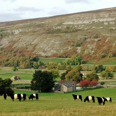 All Things Wild, Autumnal, Yorkshire, Britain, Golf Courses, Country Roads, Twitter, Top, Spinning Top