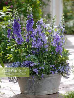 Diy Garden, Garden Cottage, Garden Planters, Garden Landscaping, Fall Planters, Shade Garden, Garden Projects, Garden Shrubs, Garden Types
