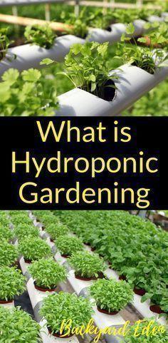 What is hydroponic gardening | Hydroponics | DIY Hydroponics | Hydroponics for beginners | Indoor Hydroponics | Hydroponic Wall | Hydroponic System | Hydroponic Gardening | Homemade Hydroponic systems | Hydroponic Nutrients | Kratky Hydroponics | Greenhouse Hydroponics | Hydroponics Design | Hydroponic Vegetables | Backyard-Eden.com #hydroponicslettuce #hydroponicsdiy #hydroponicshomemade #indoorvegetablegardeninghydroponics #indoorvegetablegardeningwall #vegetablegardendesign
