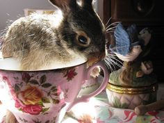 Adorable Animals Sitting in Cups