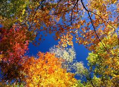 Пазл Осенний вальс — собрать пазл онлайн