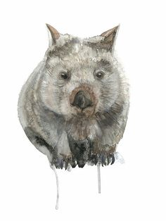 Watercolour Wombat Australian Marsupial Wombat Art by WinterOwls