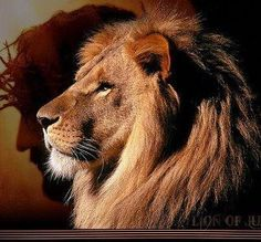 The Lion of Judah!  Roar!!