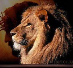 The Lion of Judah!  Roar!!
