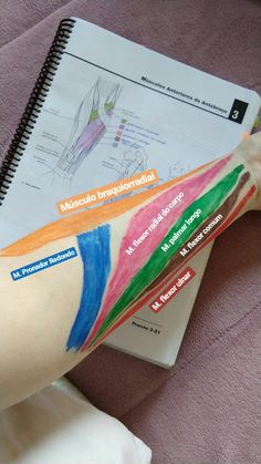 imagem anatomia funcional - Anatomia do Aparelho Locomotor Medicine Notes, Medicine Student, Physical Therapy School, 1000 Lifehacks, Studying Medicine, Medical Anatomy, Human Anatomy And Physiology, Muscle Anatomy, Anatomy Study