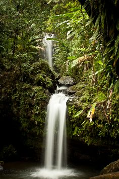 El Yunque Tropical Rainforest (Puerto Rico). 'Lush forests, verdant hills and crashing waterfalls attract visitors to El Yunque. It's a place to embark on a short hike through the oxygen-rich mist and gawk at Jurassic-sized ferns.' http://www.lonelyplanet.com/puerto-rico/eastern-puerto-rico/el-yunque