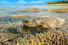Lady Elliot Island Eco Resort Great Barrier Reef