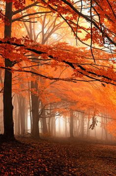 4nimalparty:  Kingdom of silence by Janek Sedlar
