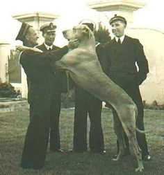 Just nuisance, only dog to be enlisted in the Royal navy in Simons Town. Served between 1939 - 1944.
