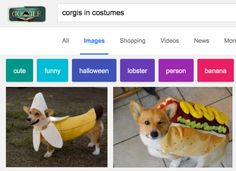 """""""Corgis in costumes."""" 