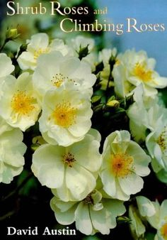 Shrub Roses and Climbing Roses by David Austin