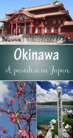 Okinawa is a beautiful island that has so much to offer!