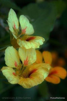 Macro/Flores do campo.....
