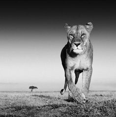 David Yarrow is a self-taught 47-year-old wildlife photographer