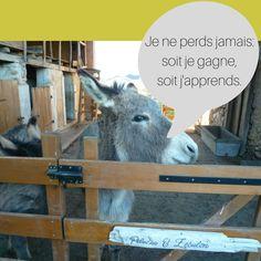 L'âne Zébulon et sa sagesse légendaire (inspirée de Nelson Mendela) Goats, Animals, Plush, I Win, Wisdom, Animales, Animaux, Animal, Animais