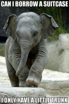 Animal Jokes Are So Bad They're GOOD…I'm Cracking Up! A Jason le encanta elefantes.A Jason le encanta elefantes. Cute Baby Elephant, Little Elephant, Cute Baby Animals, Animals And Pets, Funny Elephant, Elephant Elephant, Asian Elephant, Elephant Quotes, Clever Animals
