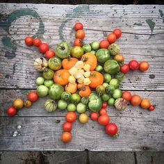 As the days start getting shorter with autumn just around the corner, we start to worry about all of those green tomatoes out there. Will there be enough warmth and daylight to ripen them before th… Ripen Green Tomatoes, Garden Club, Greens Recipe, Urban Farming, Healthier You, Simple Way, Houseplants, Indoor, Vegetables