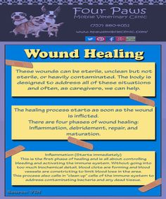 Wound Healing Cell Forms, Wound Care, Wound Healing, Blood Vessels, How To Apply
