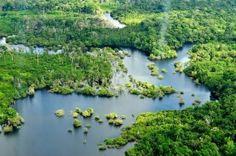 Amazon, South America.