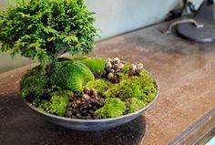 はじまりましたと植物ワークショップのご報告 : Kitowaの日々