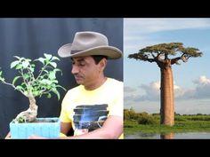 Baobab tree /kalpavriksha Care - YouTube Baobab Seeds, Baobab Tree, Compost, Youtube, Youtubers, Youtube Movies, Composters