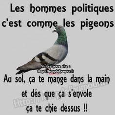 Jokes Quotes, Funny Quotes, French Proverbs, Funny French, Motivational Phrases, Humor, Proverbs Quotes, Positive Affirmations, Really Funny
