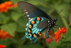 Butterflies at DuckDuckGo