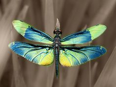 Dragonfly. Rhyothemis fuliginosa. by Kaz Watanabe.