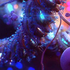 """Ebola Virus"" Illustration. #cg #zbrush #3d #3dmodel #illustration #sculpting #model #digital #render #medicine #science #human #body #microworld #organic #micro #virus #ebola #biology #anatomy #disease #killer #microscope #beautiful #art #artistsofinstagram #draw #design #igart #sem by kashpersky_com"