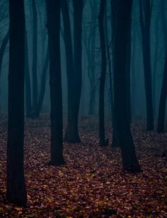 forests can be so inviting. The shroud of mist coating the air with a flat graphic back drop of withering dark trees.Eerie forests can be so inviting. The shroud of mist coating the air with a flat graphic back drop of withering dark trees. Dark Tree, Dark Autumn, Autumn Forest, Urban Decay, Mists, The Darkest, Nature Photography, Photography Couples, Backdrops