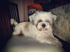 #felizdia mi perro Bonito  de la #Familia by mauroandresok