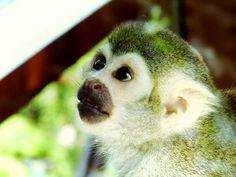 More on: http://schattenglanz.blogspot.de/2015/04/pic-monkeys-take-ii.html