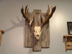 european mounts ideas more european deer mount ideas european mount ... Mule Deer European Mount