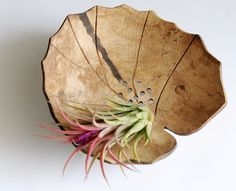 Decorative Bowls: Home & Kitchen Lotus Leaves, Plant Leaves, Coconut Shell Crafts, Coconut Leaves, Decorative Bowls, Exotic, Sweet Home, Dishes, Elegant