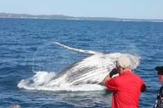 Breaching whale off the bow of in Whale Watching, Wild And Free, Whales, Great Photos, Dolphins, Freedom, The Past, Coast, Bow