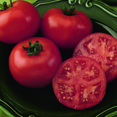 'Bush Champion' is one of the best varieties for growing in large containers on patios and deck! The plant is more upright and bushy than other vining types, which makes it ideal for gardeners that have limited space but want to grow their own tomatoes. This determinate, disease resistant variety will produce one large crop of tomatoes. The large, round globes slice well and are delicious when added to salads or sandwiches.