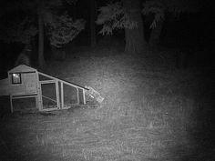 Bigfoot Caught Breaking Into California Man's Chicken Coop Real Bigfoot, Bigfoot Sasquatch, Bigfoot Photos, Giant Skeleton, Bigfoot Sightings, Cryptozoology, July 28, Go Outside, Worlds Of Fun