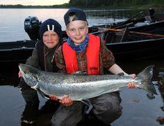 Lohenkalastus Pellossa Tornionjoella on hyvä koko perheen lomasuunnitelma