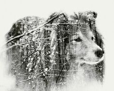 Multiple exposure portraits by Christoffer Relander.